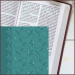 tPt - the Passion translation - Compact category - Buy Christian Books Online here